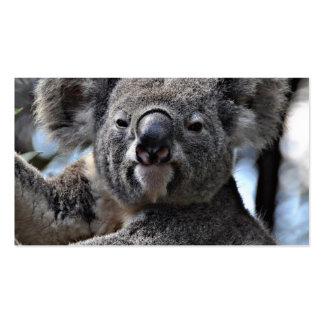 cute koala pack of standard business cards