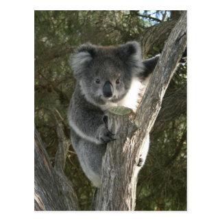 Cute Koala Climbing a Tree Postcard