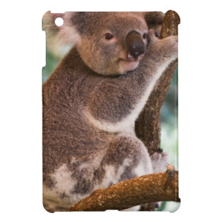 Cute Koala iPad Mini Covers