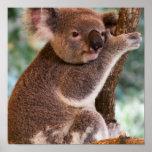 Cute Koala Poster