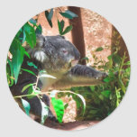 Cute Koala Round Stickers
