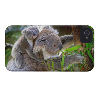 Cute Koalas Case-Mate iPhone 4 Cases
