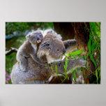 Cute Koalas Poster