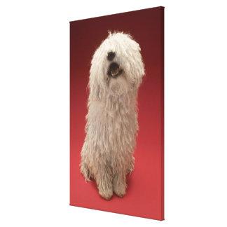 Cute Komondor Dog Canvas Print