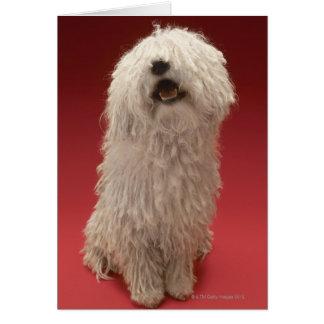 Cute Komondor Dog Card