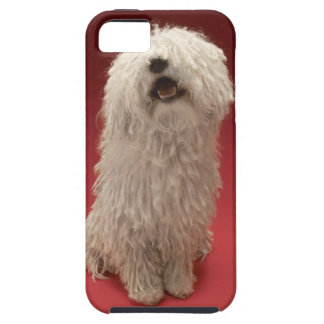 Cute Komondor Dog Case For The iPhone 5