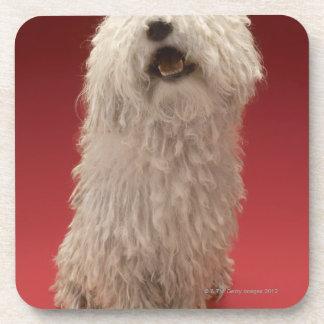Cute Komondor Dog Coasters