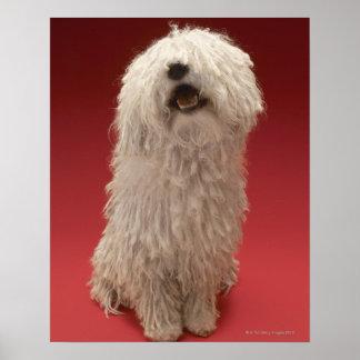 Cute Komondor Dog Poster