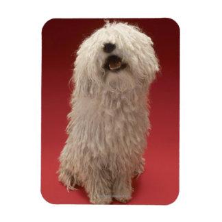 Cute Komondor Dog Rectangular Photo Magnet