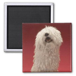 Cute Komondor Dog Square Magnet