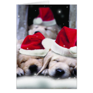 Cute labrador puppies with x-mas hats greeting card