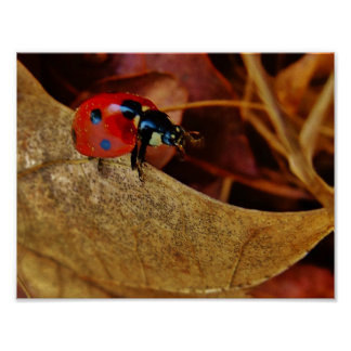 cute Ladybug costume personalize name gift Poster