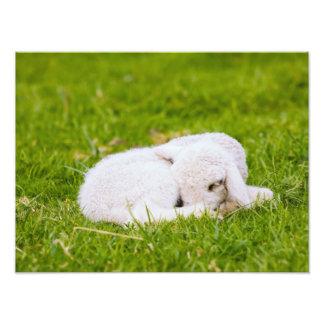 Cute Lamb Art Photo