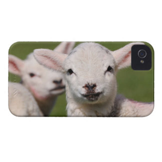 Cute lambs iPhone 4 Case