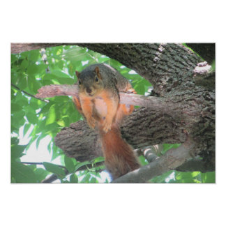 Cute Lazy Squirrel Poster