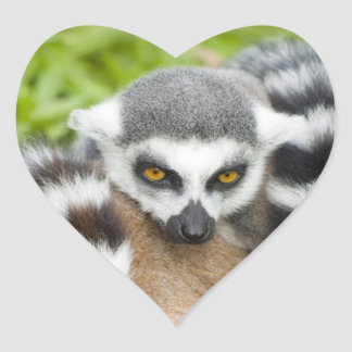 Cute Lemur Stripey Tail Heart Sticker