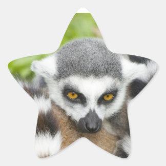 Cute Lemur Stripey Tail Star Sticker