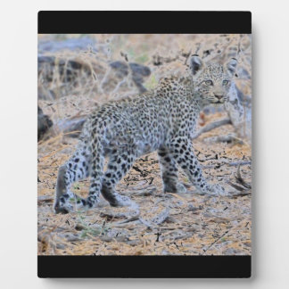 Cute Leopard Cub on the Move Photo Plaques