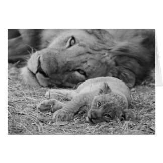 Cute Lion Cub Resting With Father Card