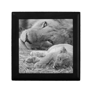 Cute Lion Cub Resting With Father Gift Box