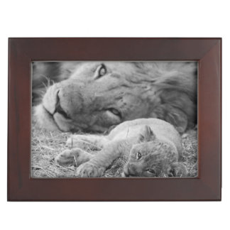 Cute Lion Cub Resting With Father Keepsake Box