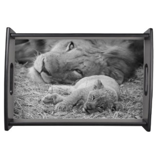 Cute Lion Cub Resting With Father Serving Tray