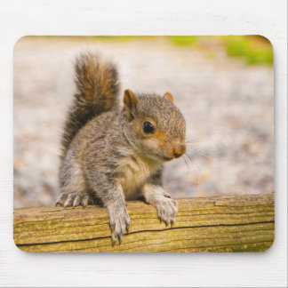 Cute Little Baby Squirrel Mouse Mat