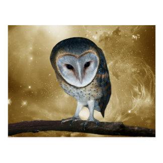 Cute little Barn Owl Post Card