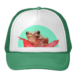 Cute Little Brown Marbled Reed Frog Red Flower Cap