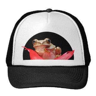 Cute Little Brown Marbled Reed Frog Red Flower Trucker Hat