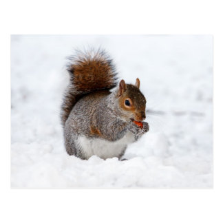 Cute little brown squirrel in snow postcard
