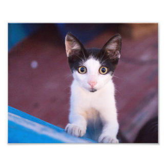 cute little cat photo print