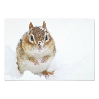 Cute Little Chipmunk in the Snow Art Photo