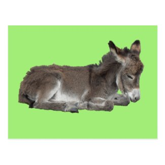 Cute Little Chocolate Donkey Foal Dozing on green