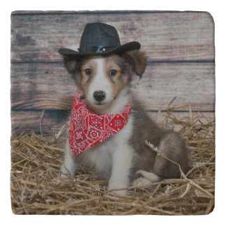 Cute Little Cowboy Puppy Trivet