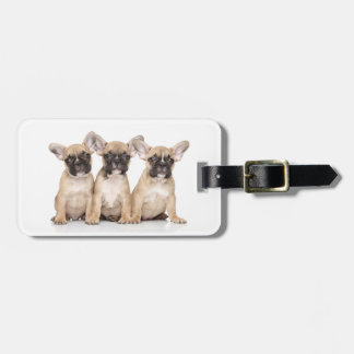 Cute little French Bulldogs Luggage Tag
