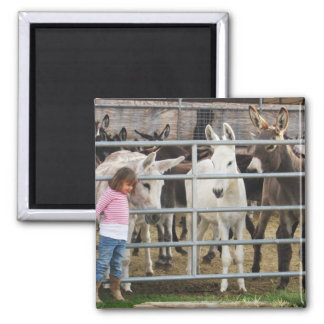 Cute Little Girl and Donkeys Magnet