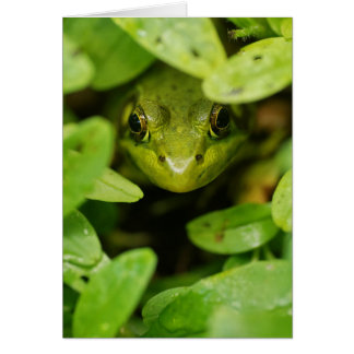 Cute Little Green Frog Greeting Card