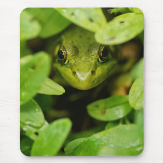 Cute Little Green Frog Mouse Pad