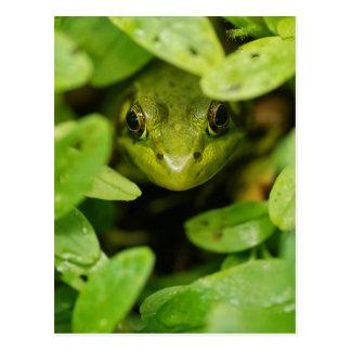 Cute Little Green Frog Postcard