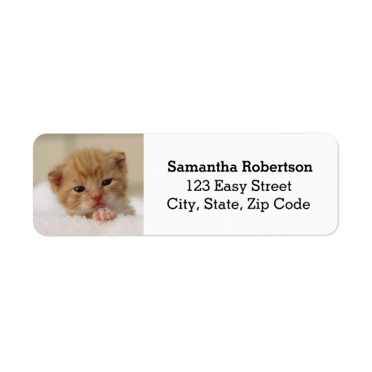 Cute little kitten address labels