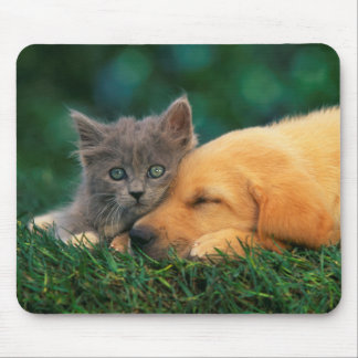 Cute little Kitten and puppy together Mouse Mat