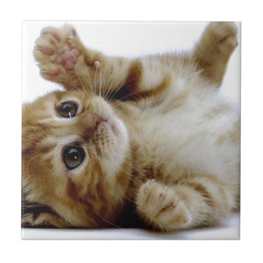 cute little kitten cat pet ginger tabby tile