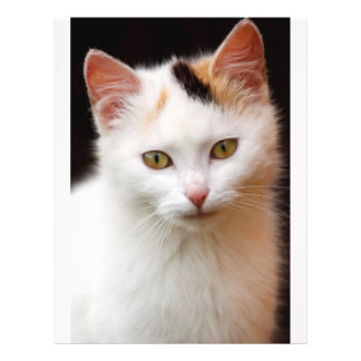 Cute Little Kitten Full Color Flyer