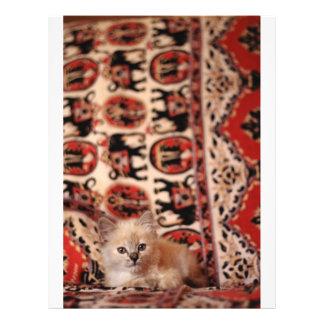 Cute Little Kitten Personalized Flyer