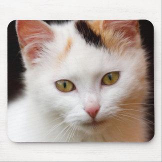 Cute Little Kitten Mouse Pad