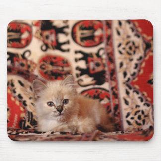 Cute Little Kitten Mouse Pads