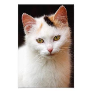 Cute Little Kitten Art Photo