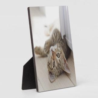Cute Little Kitten Plaques