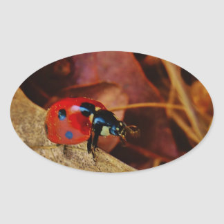 cute little Ladybug costume personalized name gift Oval Sticker